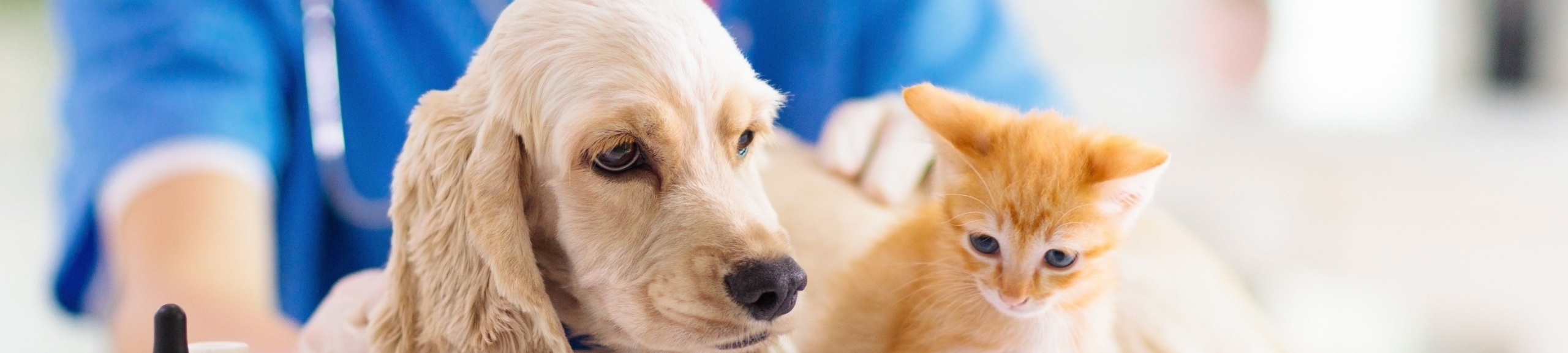 Controlled Substance Diversion in Veterinary Medicine